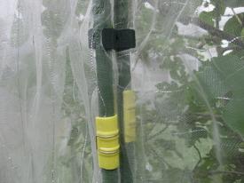 イチジクの取り合い・・・カミキリムシVS私 ネットを支柱に留める道具はコレ