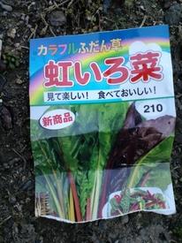 べにいろ菜 種蒔き