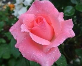 どんなお花が咲くかお楽しみに(*^^*)