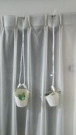胡蝶蘭を植え込み材なしで育ててみる 2016.12.31