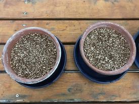 種まきパンジー・ビオラを咲かせる 種まきの準備です