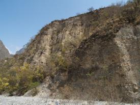 絶滅危惧種 アズテキウム属 花籠 たった3ヶ所しかない自生地