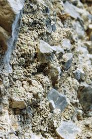 絶滅危惧種 アズテキウム属 花籠 😳よく眼を凝らして下さい 自生状況🌵