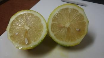 レモン育て!取りたてレモンを楽しむ。 中身もしっかり!