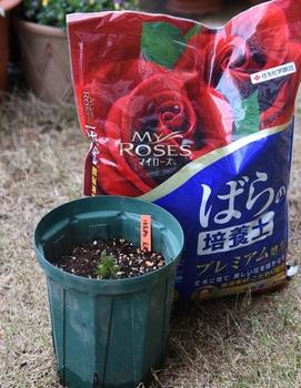 クレマチスの栽培 19.03.17 植え替え