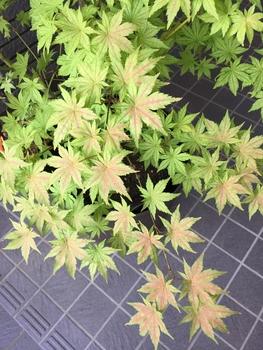 鴫立沢の四季を楽しみたい。(*^^*) 少し色が変わってきました。