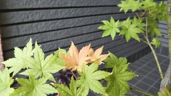 鴫立沢の四季を楽しみたい。(*^^*) 紅葉までの足どりは遅く。(^_^;)