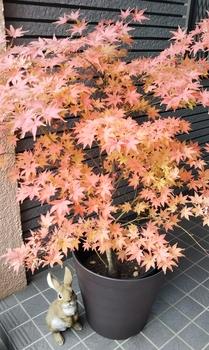 鴫立沢の四季を楽しみたい。(*^^*) オレンジ色の波のようです。