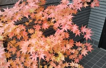 鴫立沢の四季を楽しみたい。(*^^*) アップにしました。🎵(⌒‐⌒)✌️