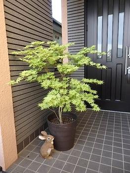 鴫立沢の四季を楽しみたい。(*^^*) 玄関開けたら鴫立沢。(*^^*)✌️