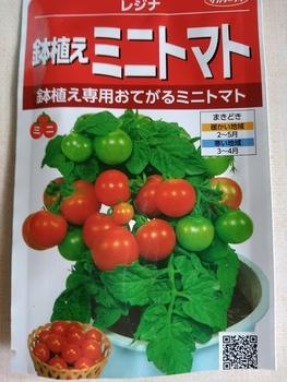 背の低いミニトマト、種蒔きから頑張る💪