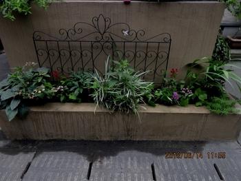 スカーレットちゃんリベンジ 玄関花壇