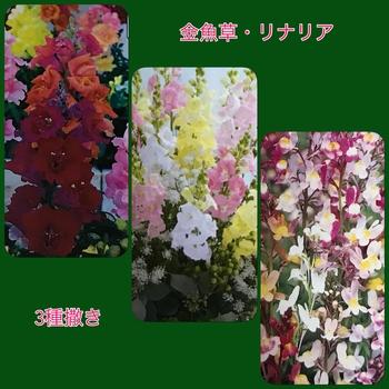 春はカラフルマナハウス♪( ´▽`)