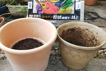 クリスマスローズ🥀土替え完了 鉢底には排水の良い土