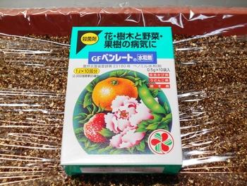 コオニユリを種から育てる(日本古来の作物) 種子の消毒(1日目)