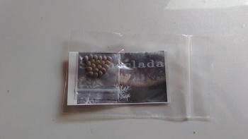 ステノクラーダ(銀角珊瑚) 実生 種入手