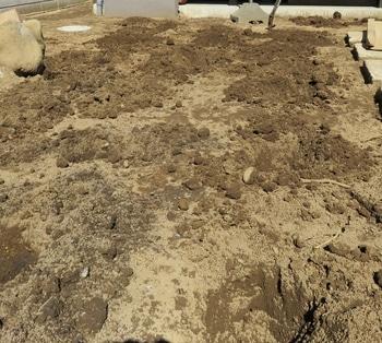 クラピアK7 先ずはクラピアを植える穴掘り
