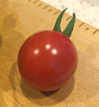 ミニトマト プレミアムルビー 0709 収穫