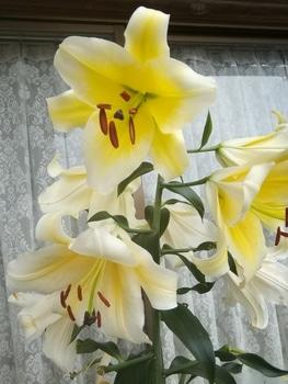 コンカドール 最後のお花