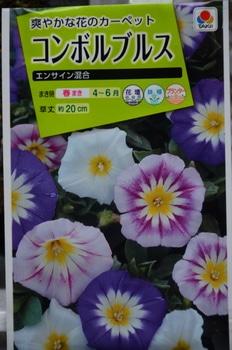 三色昼顔  夏の日盛りを彩る 種袋です。