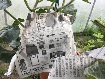 種から育てる 袋掛け