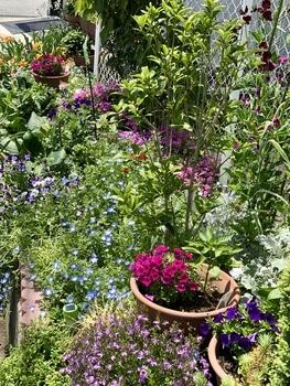 「職場の花壇」花色作戦 小花のサフィニアもかわいい5