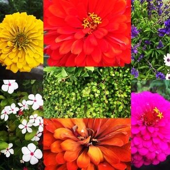 「職場の花壇」花色作戦