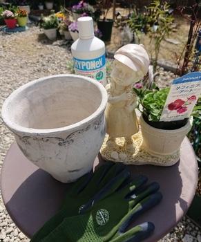 サフィニアアート《あずきフラッペ🍧》を鉢いっぱいに咲かせてみせます😉 いよいよ始めます😉2019年4月5日