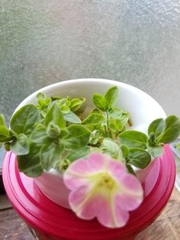 【変化する花模様】サフィニア アート【ももいろハート】 小さいハート
