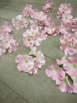 【変化する花模様】サフィニア アート【ももいろハート】 75個