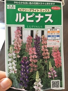 夏の花壇のメインを、種から育ててみる。