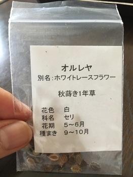 オルレア リベンジ!(春蒔き→秋蒔き)