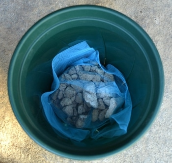ボリュームのあずきフラッペをめざして 鉢底石を入れて植え付けます
