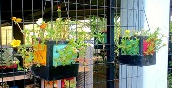 タテニワ・垂直栽培 百均CDボックスでポーチュラカ栽培  2019/7/20 ハンギング