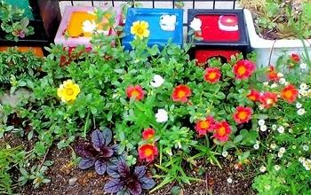 タテニワ・垂直栽培 百均CDボックスでポーチュラカ栽培  2019/6/30 花チャレンジ終了