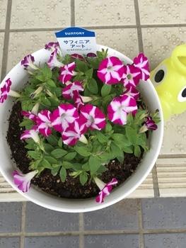 どんどん育ってね(サフィニアアート パープル) ナメクジ vs 花まるこ