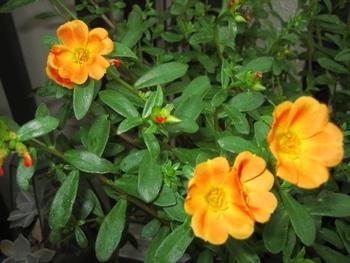 お気に入りの花を育てる。 お気に入りの花を育てる。