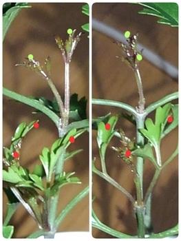 【1】挿し木で増やして、来春 花を咲かせたい!  12月1日いろんな所が動く!