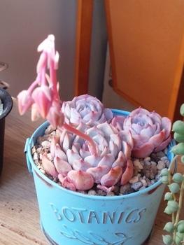ピンク色🌹可愛いすぎ❤ 3月