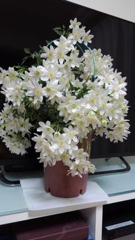【2】挿し木…  挿し木から花が咲くまで!