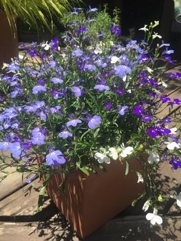 瑠璃色のかぜが吹く庭で。 梅雨の晴れ間のお天気の日