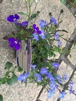 瑠璃色のかぜが吹く庭で。 鉢植えアイテム勢揃い。