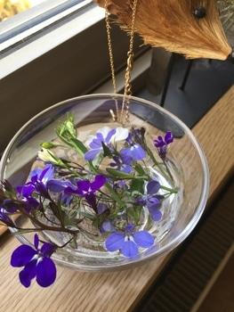 瑠璃色のかぜが吹く庭で。 ピンチしたお花たち