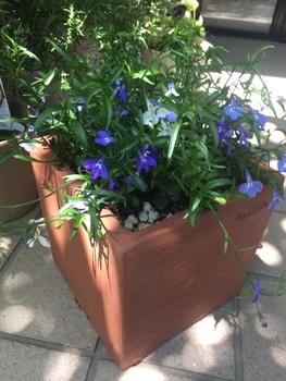 瑠璃色のかぜが吹く庭で。 バランスよく3色