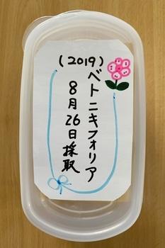 青いケシ(ベトニキフォリア)の花を楽しもう(^-^)ノ🌼地植えー幾つ咲くかな♪  青いケシの種の保存