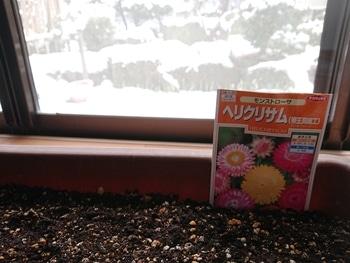 帝王貝細工にリベンジ‼️ 雪~⛄