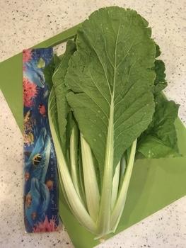 ミニ白菜🥬できるかな? 1126