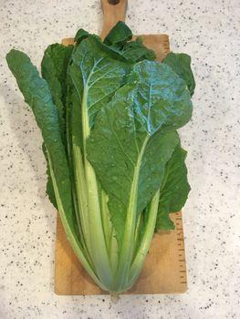 ミニ白菜🥬できるかな? 1212