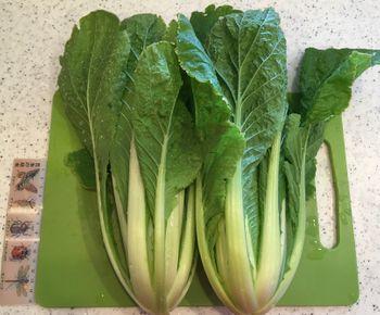 ミニ白菜🥬できるかな? 1214