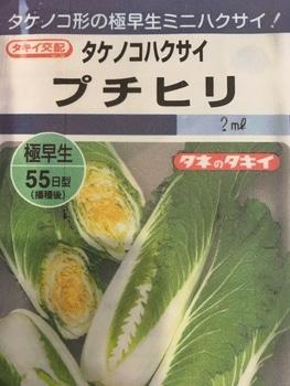 ミニ白菜🥬できるかな?